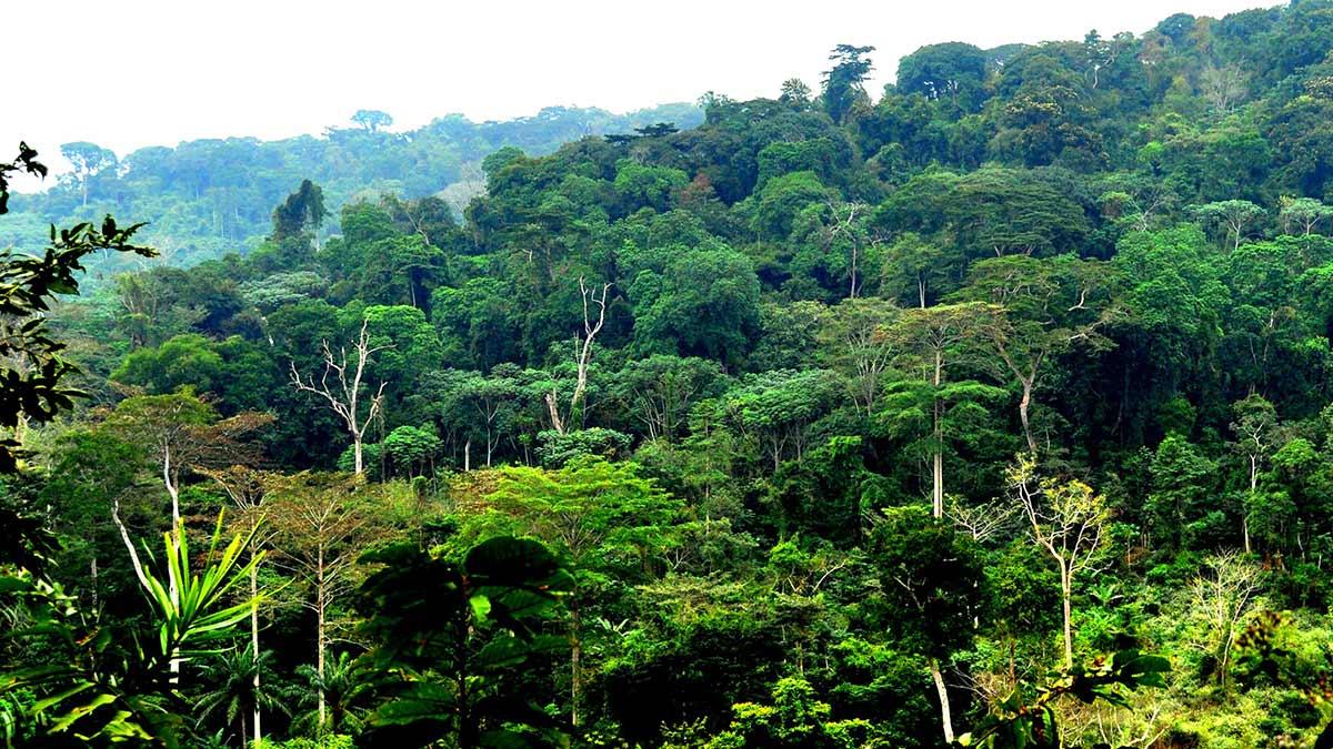 congo-basin-illegal-logging-farming