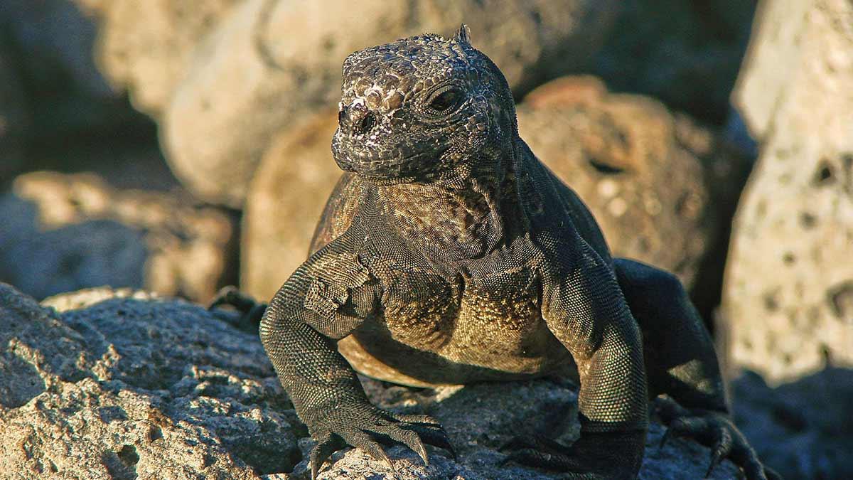 ekosystem-in-galapagos-islands