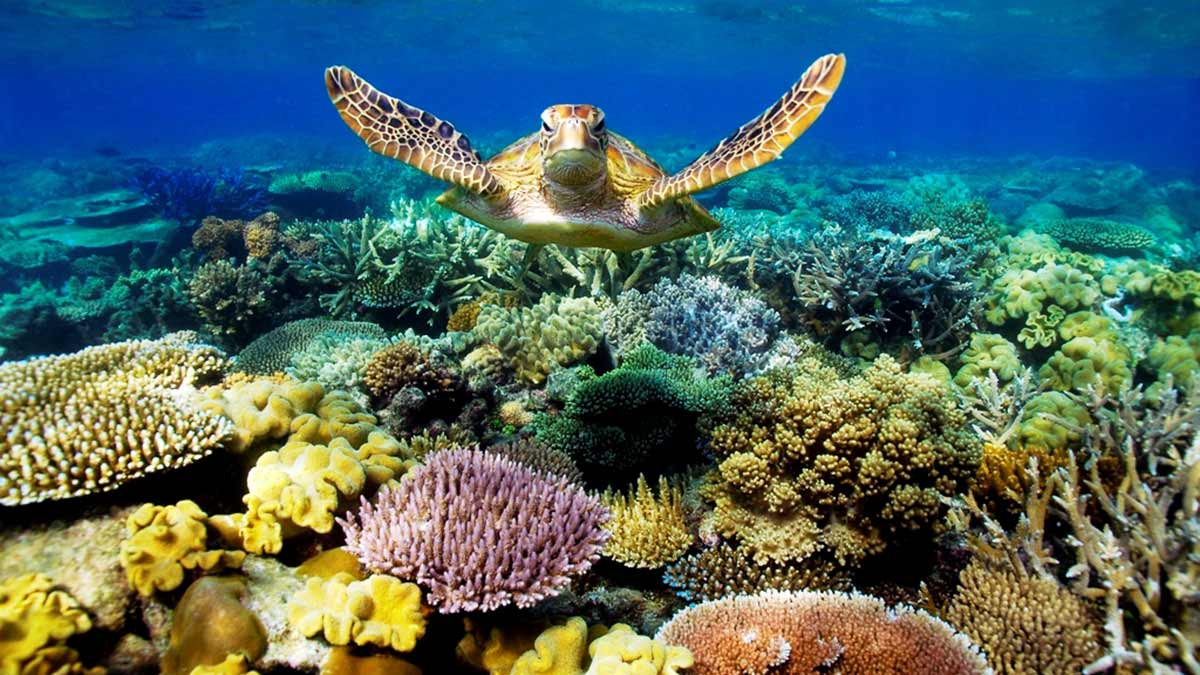great-barrier-reef-dying-australia
