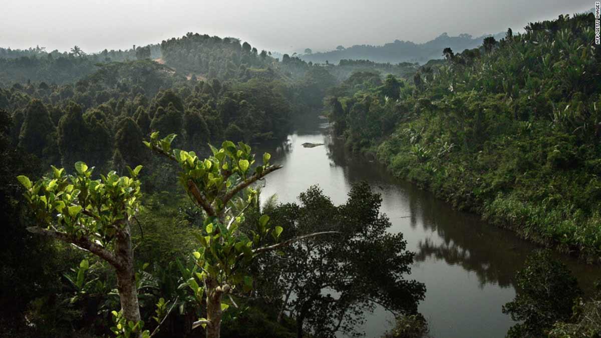 madagascar-forest-illegal-farming-logging