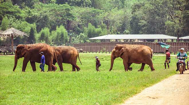 visiting-elephant-park-sanctuary-thailand